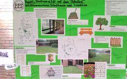 Wildblumenwiese mit Schulbaum